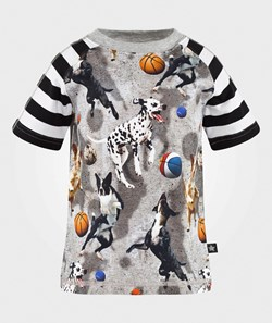 Molo Rollo T-shirt SS Leaping Dogs