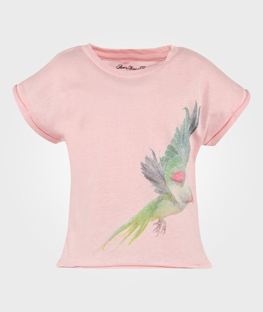 How To Kiss A Frog Cut T Parrot Pink Pink