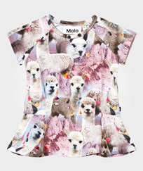 Molo Robbin T-Shirt Lovely Llama Lovely Lhama