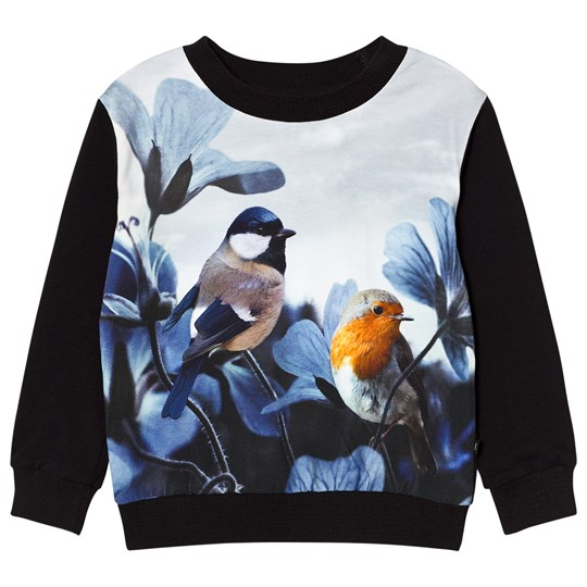 Molo Regine Sweatshirt Birds of Poetry Birds of Poetry