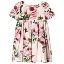 Dolce & Gabbana Pale Pink Rose Print Cotton Dress HAH41
