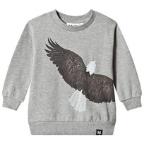 Molo Marku Sweat shirt Eagle Eagle