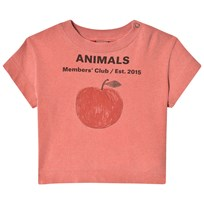 The Animals Observatory Rooster T-Shirt Red Peach RED PEACH