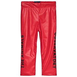 Image of The Animals Observatory Chicken Pants Red Apple Black The Animals 6 år (1098244)