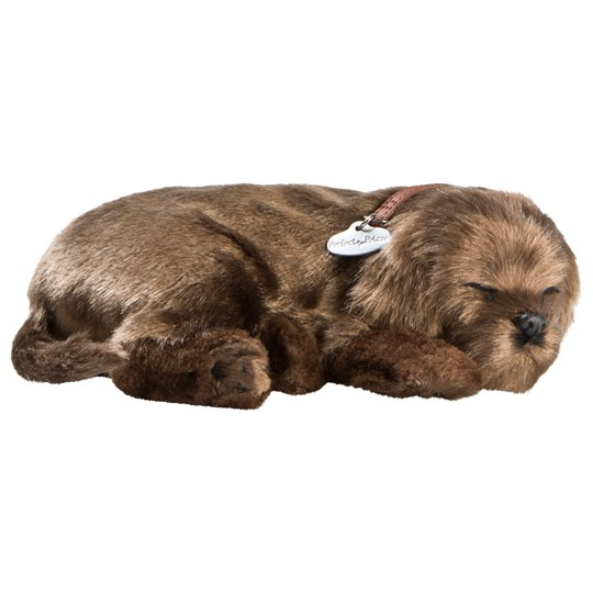 Perfect Petzzz Chocolate Lab BROWN