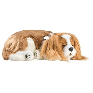Image of Perfect Petzzz Cavalier King Charles 3+ years (1212523)