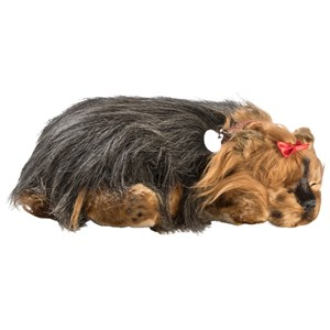 Image of Perfect Petzzz Yorkie 3+ years (1212526)