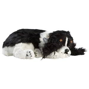 Image of Perfect Petzzz Cocker Spaniel 3+ years (1212528)