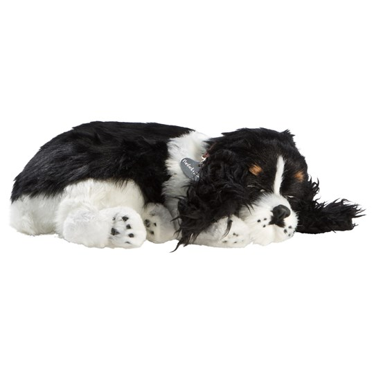 Perfect Petzzz Cocker Spaniel Black