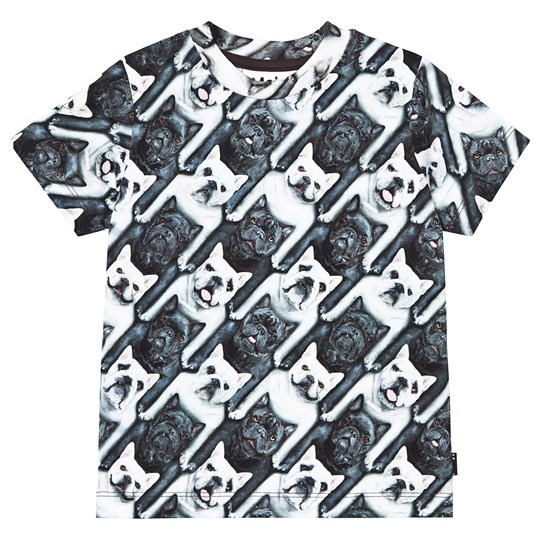 Molo T-shirts SS Ralphie English bulldog English bulldog