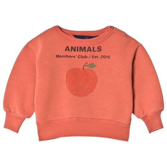 The Animals Observatory Bear Baby Sweatshirt Red Peach RED PEACH